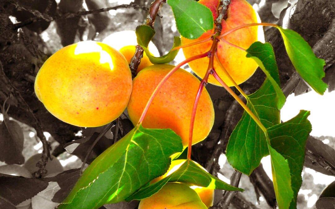 Vous avez besoin de fruits bio France pour vos confitures originales ? Découvrez comment se déroule le sourcing de la confiture bio chez un confiturier engagé pour la qualité du made in France !